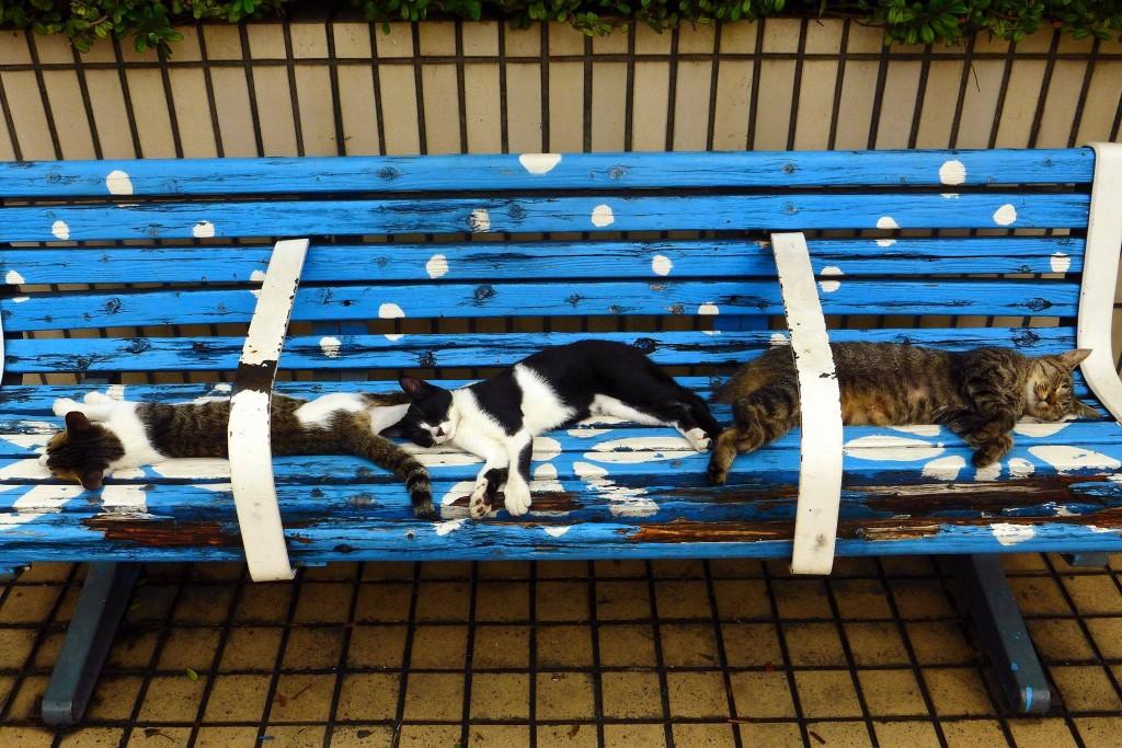 猫写真展示会 宣伝用写真2