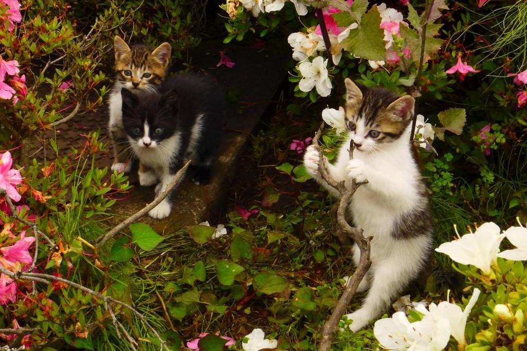 猫写真展示会 宣伝用写真1